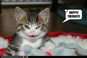 cute_kitten_happy_tuesday